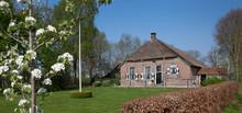 Ruinerwold Dokter Larijweg Drente Netherlands. Historic Saxion Farm. Saksische Boerderij. Flowering Pear Tree.