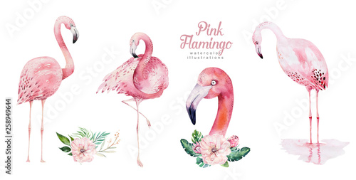 Hand drawn watercolor tropical birds set of flamingo Canvas Print
