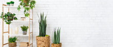 Decorative Home Plants Concept