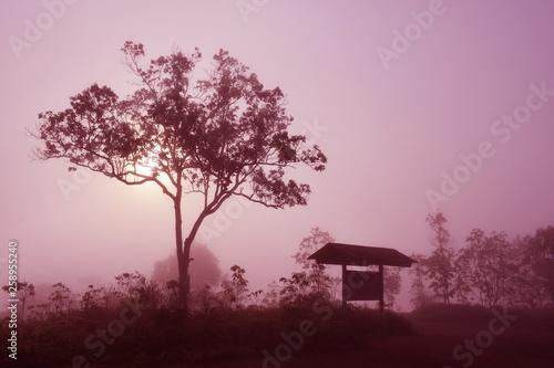 Papiers peints Grenat Natural mist landscape in the morning