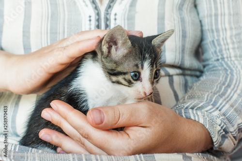 Cuadros en Lienzo  Cute kitty in womans hands. Pets care