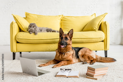Photo  cute German Shepherd lying on floor with laptop and books in and grey cat lying
