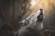 canvas print picture - Wolf howling