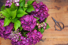 Bouquet Of Purple Hydrangeas