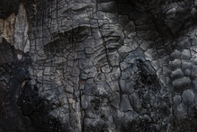 Burnt Tree Bark Background Texture