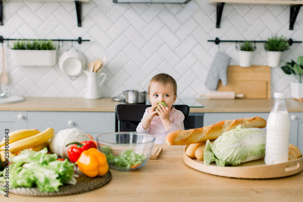 Fototapety, obrazy: Baby eating fruit. Little baby girl eating green apple while sitting in black high chair in sunny kitchen. Healthy nutrition for kids. Solid food for infant. Snack or breakfast for young child