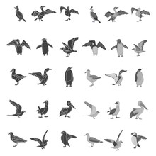 Different Sea Birds Simple, Black And White Colors Concept Icons Set