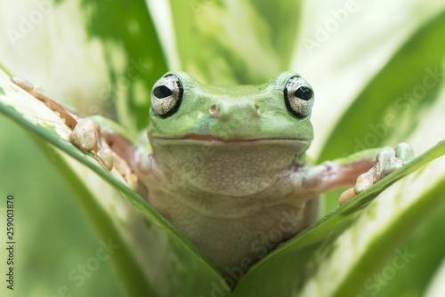 Foto op Aluminium Kikker Front in Frog