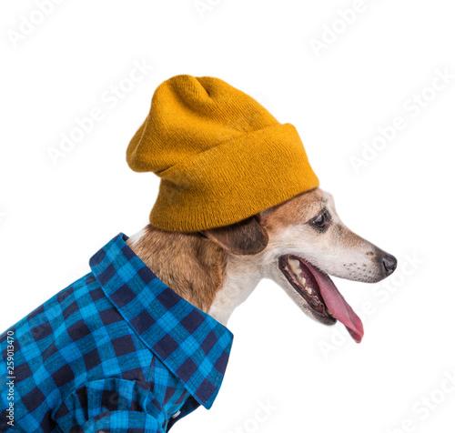 Obraz na płótnie Hipster dog portrait in blue shirt and yellow beani hat