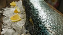 Salmon, Ice, Fish Store, Fish, Food, Frozen, Seafood, Production, Hygiene, Store, Health, Sea, Ocean, Display, Advertising, Ocean, Red Fish, Chum Salmon, Sockeye, Alaska, Kamchatka, Sakhalin, Prepared