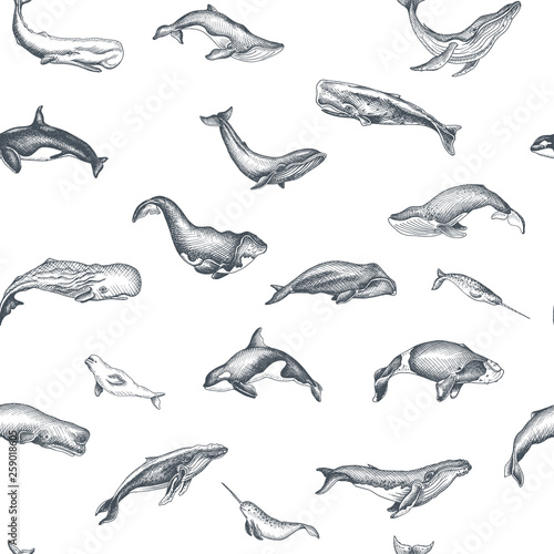 Pattern with whale Canvas Print