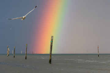 Fototapeta Morze Ein fantastischer Regenbogen in Harlesiel mit Blick auf die ostfriesische Inseln Wangerooge an der deutschen Nordseeküste