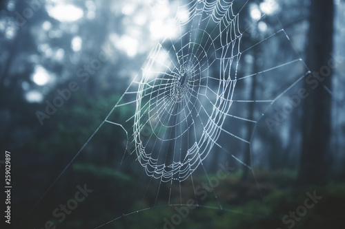 Spider cobweb in morning foggy forest landscape. Selective focus used. - 259029897