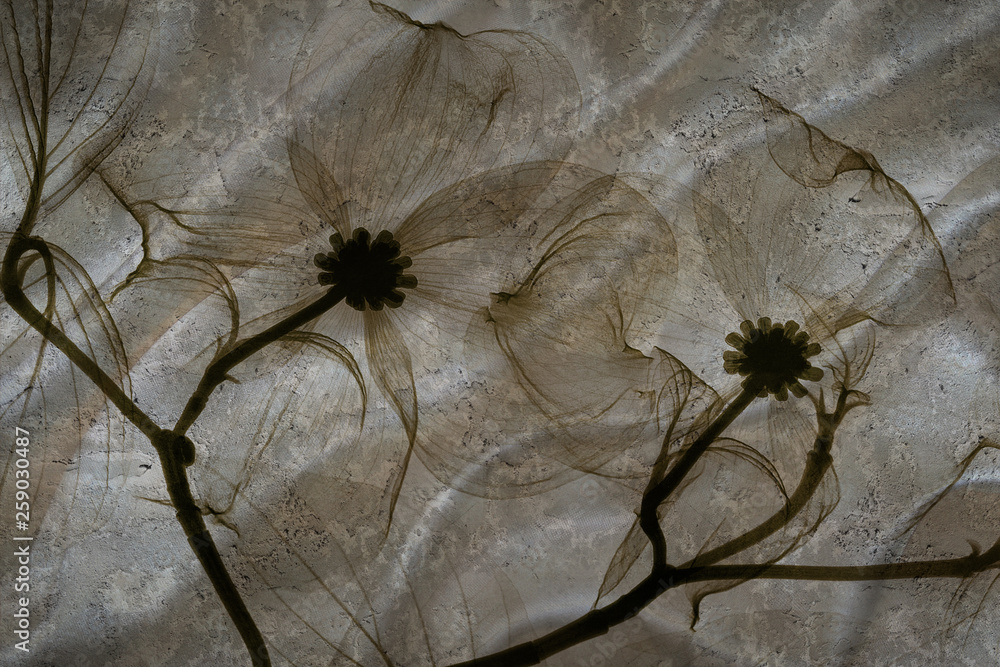 3d wallpaper, abstract flowers on concrete wall textured background. The fresco effect, silk effect