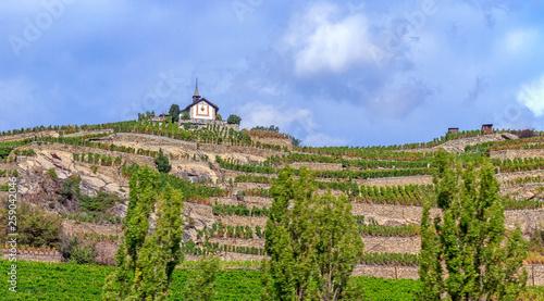 Obraz na plátně view of vineyard in switzerland