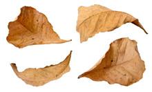 Set Of Dry Leaf On White Backg...