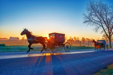 Amish Buggies At Sunrise