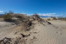 Kelso Sand Dunes In Mojave Des...