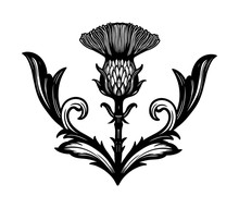 Thistle Flower -the Symbol Of ...