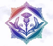 Thistle Flower -the Symbol Of Scotland.