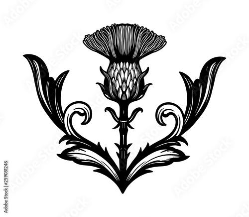 Fotografia, Obraz Thistle flower -the Symbol Of Scotland.