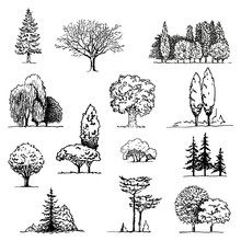 Trees Sketch Set, Hand Drawing Graphic Forest, Isolated Vector Illustration, Silhouette Elements Black And White