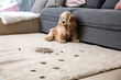 Funny dog and its dirty trails on carpet