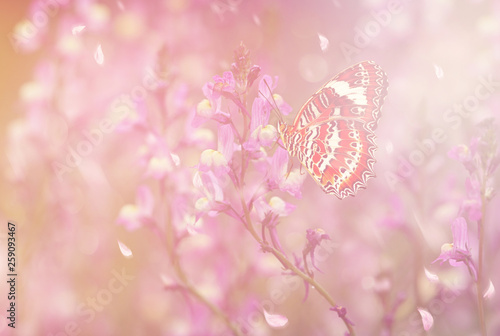 Fototapety, obrazy: Butterfly in Spring