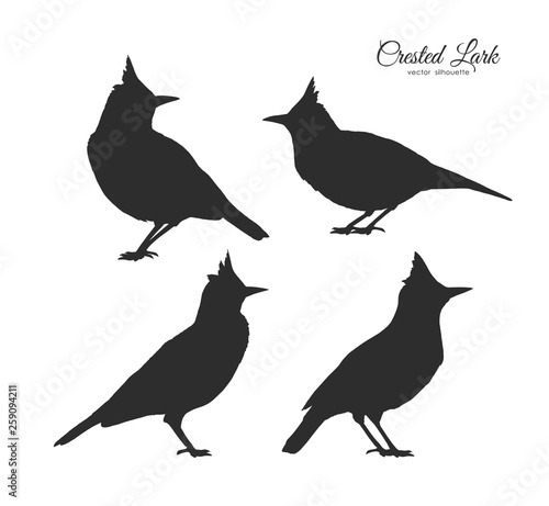 Valokuva Set of four Silhouette of Crested Lark