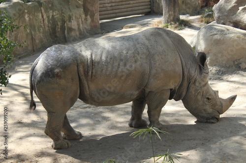 Aluminium Prints Rhino Rhino