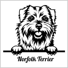 Norfolk Terrier - Peeking Dogs...