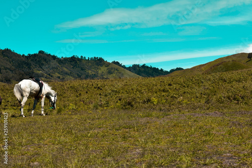 Fotografia  Scenic Green grass field view of rolling countryside green farm fields with hors