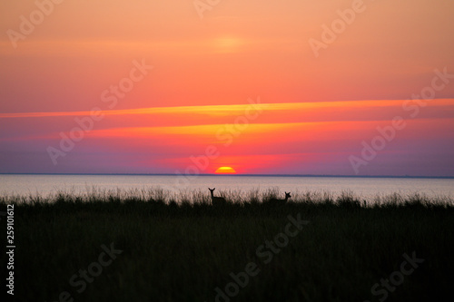 Fotografía  deer on sunset background