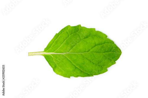 Image of green mint leaves on white background. Nature. #259102633
