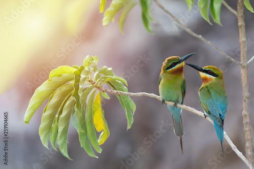 Lover birds behavior and habitat,rim light Fototapete