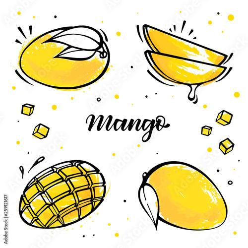Fotografía Set of mango illustration in sketch style