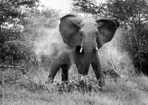 Garden Poster Elephant Elephant and sand