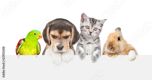 Group of pets  over empty white banner. isolated on white background. Empty space for text © Ermolaev Alexandr