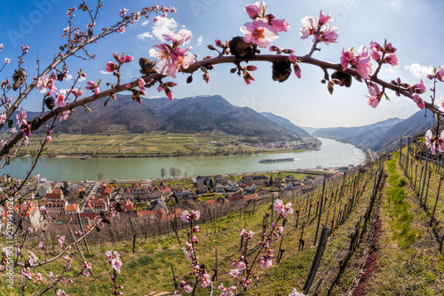 Foto Spring time in Wachau, Spitz village with boat on Danube river, Austria