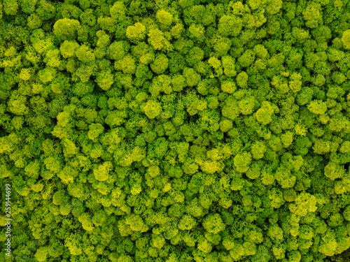 Fotografia creative idea for background of green stabilized moss