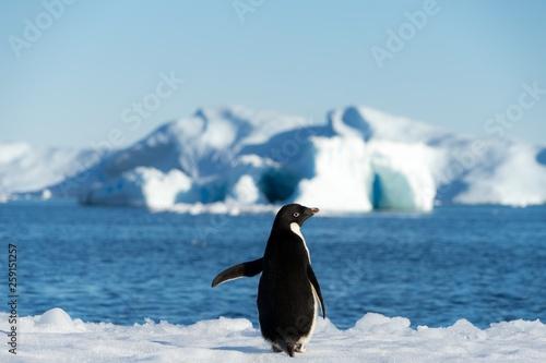 Foto auf Gartenposter Pinguin penguin antarctica