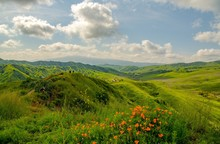 Poppies And Green Hills Line T...