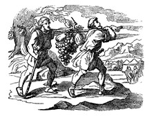 Vintage Drawing Of Biblical Story Of Scouts Of Israelites Returning With Fruits. Two Men Carry Large Grape Bunch