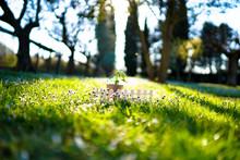 Seedling New Life Beginning. Small Plant Inside Black Soil Growing In Sunlight. Religion Concept Of Birth