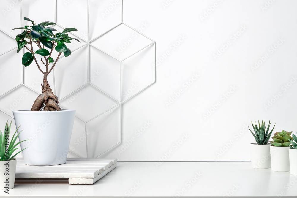 Fototapeta White desk at an empty wall with a geometric pattern. Place for text. Copy space. Green succulents, bonsai, wooden stand. Minimalist composition
