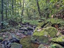 Forest River, Cockscob Basin Wildlife Sanctuary Belize