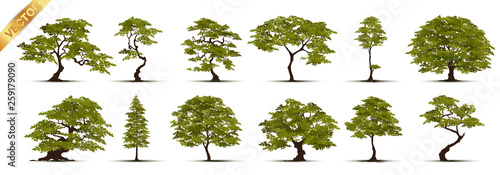Foto  Trees Isolated on White Background