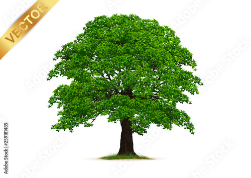 Fotomural  Trees Isolated on White Background