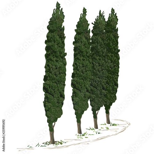 Foto Four trees of a cypress and footpath along them