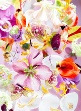 Close Up Of Colorful Flowers